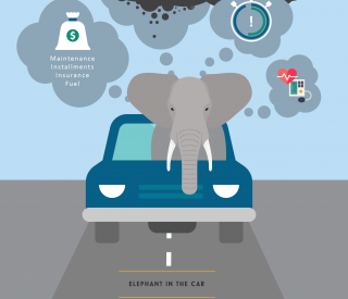 Elephant in the car